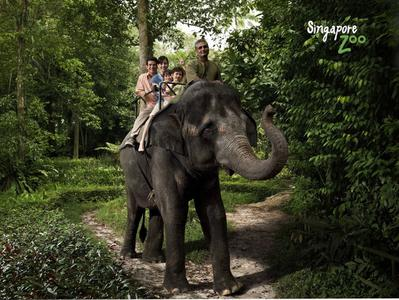 Singapore Zoo Morning Tour with Private Guide and Hotel Pick-Up
