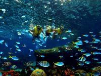Sentosa Singapore Adventure Cove Waterpark&trade One Day Pass
