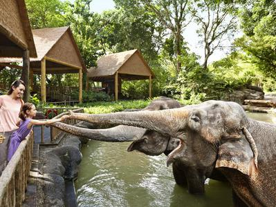 Singapore Zoo + Wildlife River Safari Combo with Hotel Pick-Up