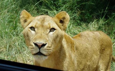 Mini Safari from Durban