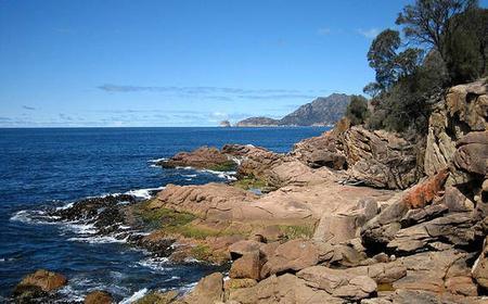 4 Day East Coast Echidna Tasmania Safari