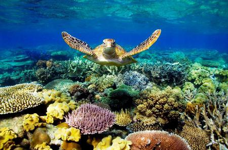 3-Day Best of Cairns Combo: The Daintree Rainforest, Great Barrier Reef and Kuranda
