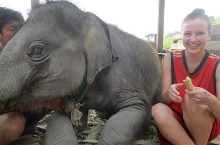2-Day at Elephant Retirement Park with Homestay and Meals in Chiang Mai