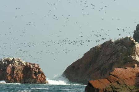 Ballestas Islands Sightseeing Boat Ride from Paracas
