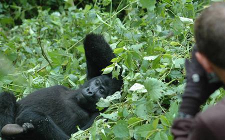 From Entebbe: Gorilla Tracking Safari