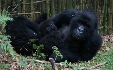 From Entebbe: Primate Safari