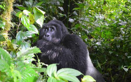 5 Day Wildlife and Gorilla Life in Uganda