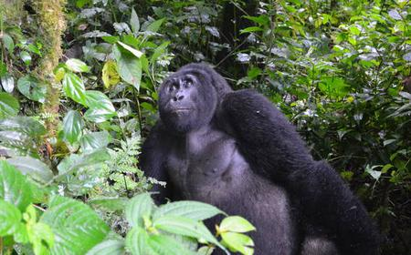 5 Day Gorilla and Wildlife Tour from Entebbe