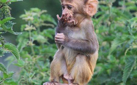 5 Day Experience of the Primates in Uganda
