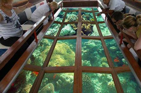 Glass Bottom Boat