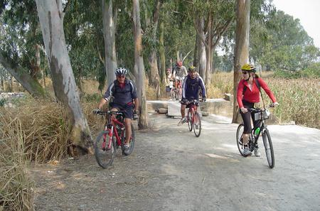 Half-Day Hong Kong Cycling Tour Including Dim Sum Lunch