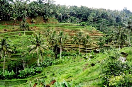 Private Tour: Ubud Village and Temples Tour
