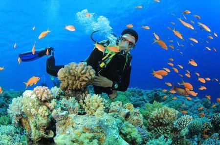 Beginners Scuba Diving Experience in Gran Canaria
