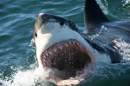 Shark Cage Diving Private Tour from Cape Town