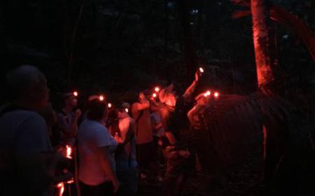 Fajardo: El Yunque Rainforest Twilight Nature Walk