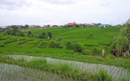 Bali: Hidden Rice Terraces Trek with a Local Guide