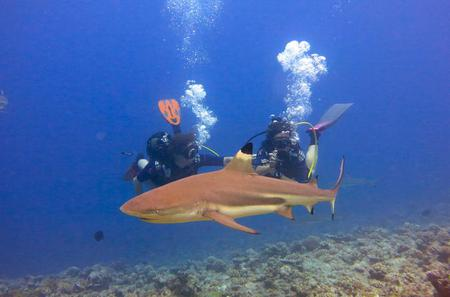 10-Day Diving and Sailing Cruise from Huahine to Bora Bora