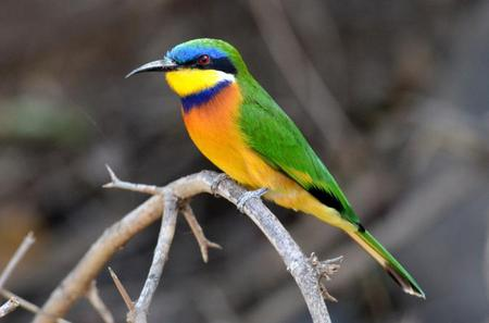 11-Day Bird Watching Tour from Addis Ababa