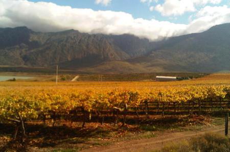 Private Shore Excursion: Cape Winelands Tour from Cape Town
