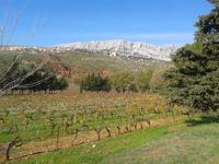 Half Day Wine Tour in Cezanne Countryside
