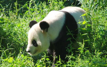 Beijing Zoo, Lama Temple and Hutongs Full-Day Tour