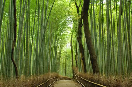 Private Kyoto Arashiyama Custom Half-Day Tour by Chartered Vehicle