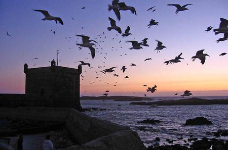 4-Day Essaouira Guided Tour including Astapor