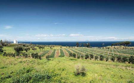 Private Wine Tour & Tasting on the Mediterranean Sea