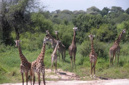 Ngorongoro National Park and Game Drive: Guided Day Tour from Arusha