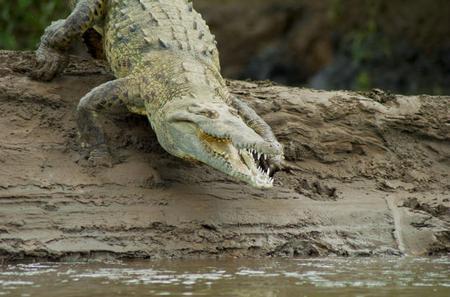 Crocodile River Cruise From Jaco