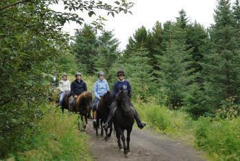 Beginner Horse Ride through Hafnarfjordur Countryside