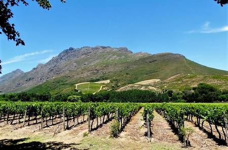 Stellenbosch Winelands Guided Half-Day Tour from Cape Town