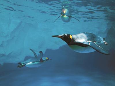 Auckland Morning Highlights with Kelly Tarltons SEA LIFE Aquarium