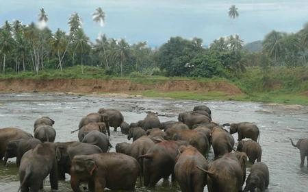 Sri Lanka Seven Days Tour