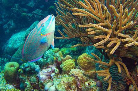 Bonaire Shore Excursion: National Marine Park Sail and Snorkel Tour
