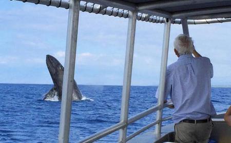 Kailua-Kona Whale Watching Cruise