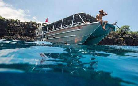 Wild Dolphin Adventure and Reef Snorkel Cruise