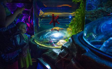 Skip The Line: AquaDom and SEA LIFE Berlin Tickets