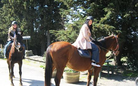 Horses and Vineyards - Horseback riding in Tuscany