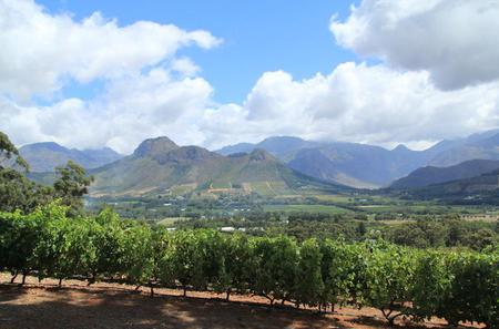 5-Day West Coast and Winelands Tour from Cape Town