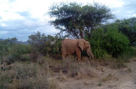 Private 3-Day Tsavo Safari from Mombasa