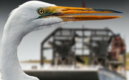 30-Minute Everglades Airboat Tour with Exhibit Entrance