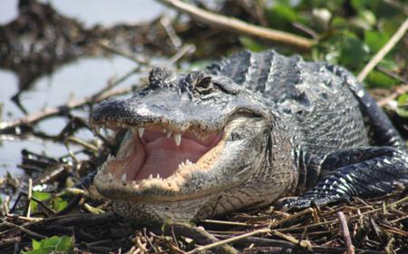 Everglades Day Safari from Sanibel, Fort Myers & Naples