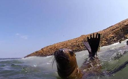 Swimming Experience With Sea Lions on Palomino Islands