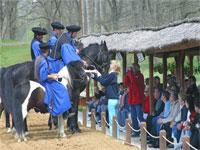 Godollo and Lazar Horse Park Tour