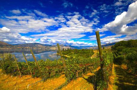 Naramata Wine Tour with Gourmet Lunch