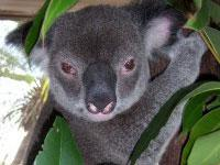 Cairns Wildlife Dome Admission Ticket