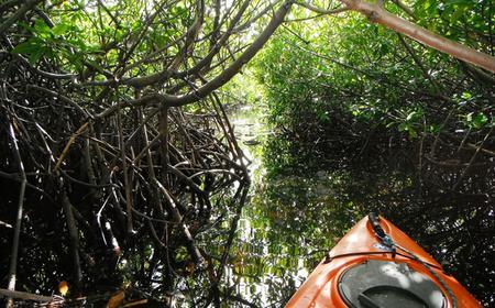 Mangrove Forest Kayak Tour