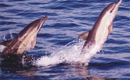 Gibraltar: Dolphin Watching Tour