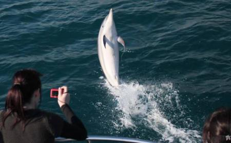 Gibraltar Dolphin Watching 90-Minute Cruise
